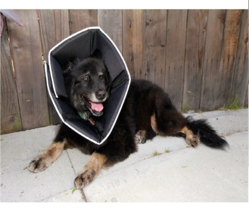 1.Comfy Cone The Original, Soft Pet Recovery Collar with Removable Stays