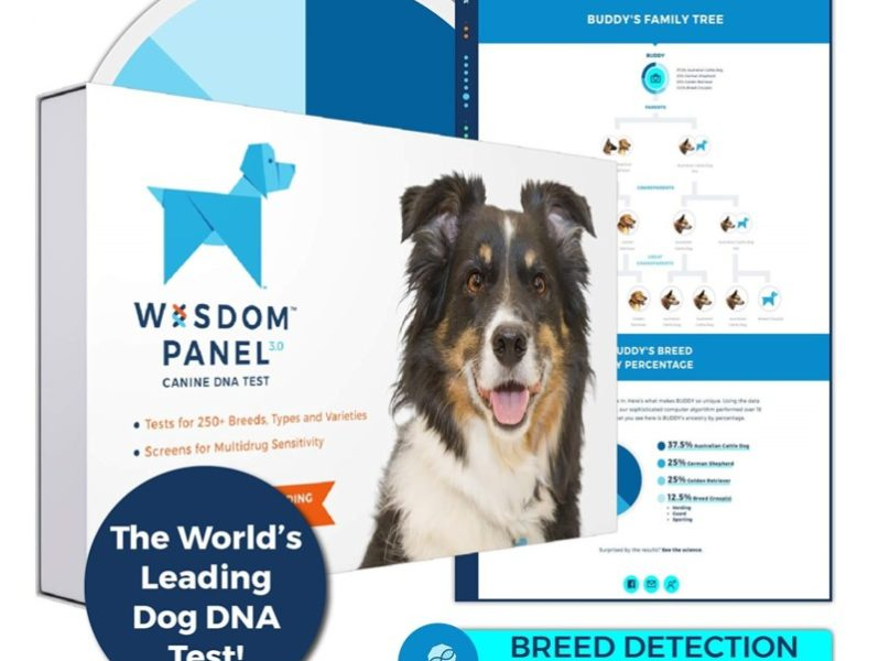 1.Wisdom Panel 3.0 Canine DNA Test - Dog DNA Test Kit for Breed and Ancestry Information