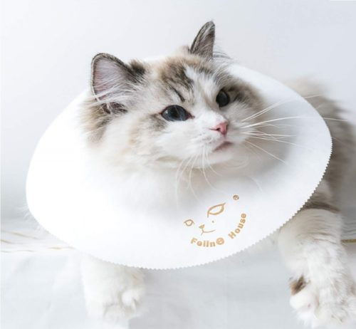 12.CAFILRA Pet Recovery E-Collar Cones (10 Pack) for Cats & Small Dogs After Surgery,Comfy Soft Elizabethan Kitten Neck Cone of Shame,Puppy Head Medical Collar