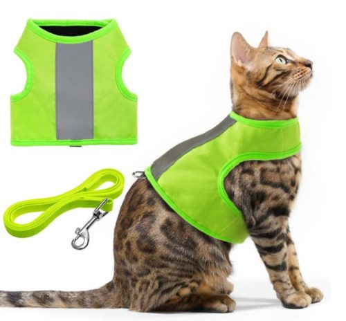 12.EXPAWLORER Reflective Cat Jacket Harness with Leash Set for Walking, Safety Traffic Soft Nylon Adjustable Vest for Pet Small Dogs Fluorescent Green
