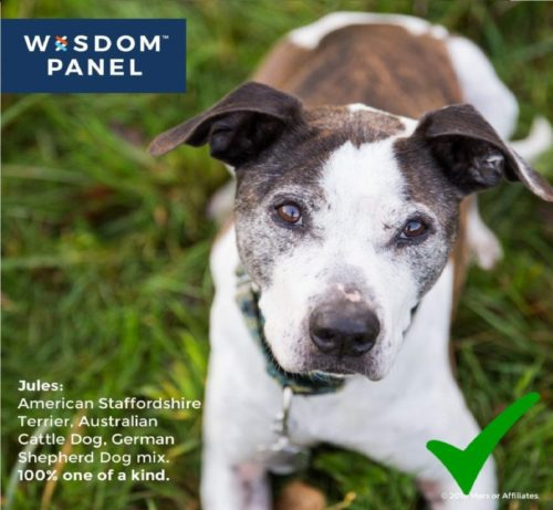2.Mars Veterinary Wisdom Panel Dog DNA Test Kit - Canine Breed Identification and Ancestry Information