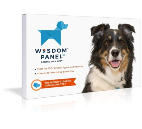 6.Wisdom Panel 3.0 Breed Identification Dog DNA Test Kit Canine Genetic Ancestry Test Kit for Dogs