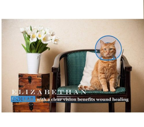 7.PETBABA Cat Cone Collar in Recovery, Clear Elizabethan Not Block Vision, Soft Padded E-Collar Protect Neck, Suitable Kitten Puppy Dog Pet in Surgery Remedy Grooming