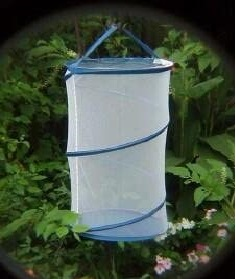 Tall Hanging Butterfly Cages by Online Science Mall